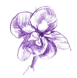 violetta medium - Copie_1.jpg